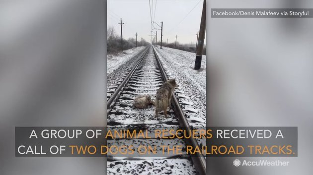 Dog injured and stuck on frozen train tracks saved by furry