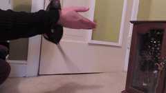 Thumbnail of 15 Incredible Rat Tricks