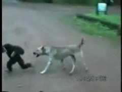 Thumbnail of Monkey versus dog