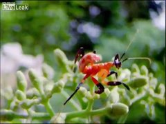 Thumbnail of Eaten Alive by a Mantis