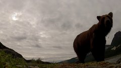 Thumbnail of A grizzly ate my go-pro!