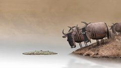 Thumbnail of Wildebeest