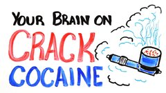 Thumbnail of Your brain on cocaine-crack