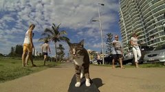 Thumbnail of CAT Super Skateboarding Adventure!