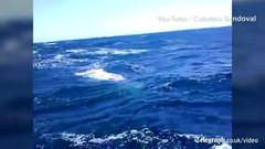 Thumbnail of Sperm whale rams tiny fishing boat in the middle of the ocean