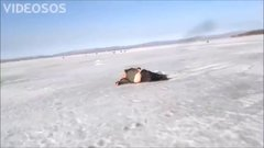Thumbnail of Russian walrus ice fishing