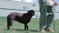 Thumbnail of Inmates Rehabilitate Abandoned Dogs