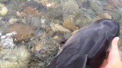 Thumbnail of Dog Stumbles Across A Dolphin In A Dangerous Situation And Alerts Owner