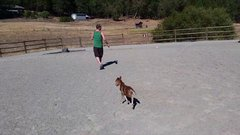 Thumbnail of 3 day old baby Miniature horse chasing his friend
