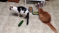 Thumbnail of Cats & Cucumbers