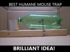 Thumbnail of The BEST humane mouse trap!