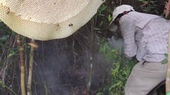 Thumbnail of Harvesting Honey from Giant Honeybees in Cambodia