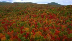 Thumbnail of This is Vermont Foliage