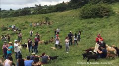 Thumbnail of 'Land of the Strays' Territorio de Zaguates - Costa Rica