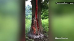 Thumbnail of Tree burns from inside out after lightning strikes it