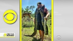 Thumbnail of Python hunters take on Florida Everglades' snake problem