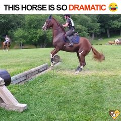 Thumbnail of Overly Dramatic Horse