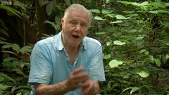 "Thumbnail of Incredible ""Toilet"" plant 