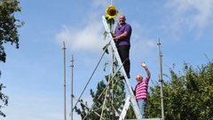 Thumbnail of Tallest Sunflower - Guinness World Records - YouTube