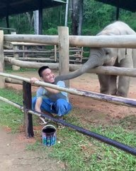 Thumbnail of Baby elephant wants to play