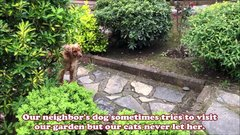 Thumbnail of Our cats never let the neighbor's dog enter our garden