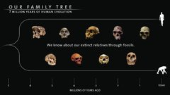 Thumbnail of Seven Million Years of Human Evolution