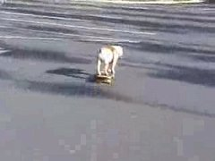 Thumbnail of Skateboarding dog