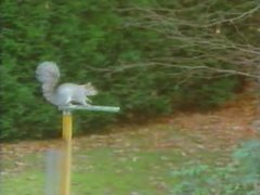Thumbnail of Squirrel at obstacle course