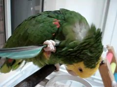 Thumbnail of Smart Parrot