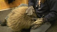 Thumbnail of Porcupine