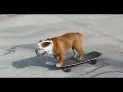 Thumbnail of Skateboarding dog #2