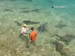 Thumbnail of Shark Expert Attacked During Filming