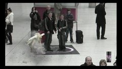 Thumbnail of Lynx Excite Angel Ambush London Victoria