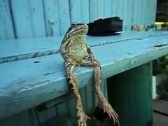 Thumbnail of A Frog Sitting on a Bench Like a Human