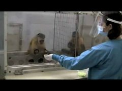 Thumbnail of Hilarious Experiment On Monkeys