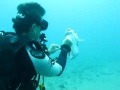 Thumbnail of Diver Saves Puffer Fish From Hook