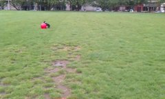 Thumbnail of Enthusiastic dog chasing a ball